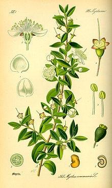 tavola botanica